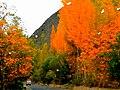 Fall in Hunza-basraa-8.jpg