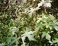 Fall leaves belmont park.jpg