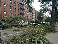 Fallen bough after Hurricane Isaias, Lincoln Road, Brooklyn, New York, August 2020.jpg