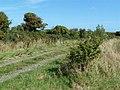 Farm Track at Reedstown - geograph.org.uk - 2090703.jpg