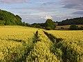 Farmland, Bledlow - geograph.org.uk - 892870.jpg