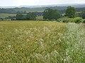 Farmland, Clarendon Park - geograph.org.uk - 483730.jpg
