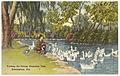 Feeding the swans, Avondale Park, Birmingham, Ala. (7372460514).jpg
