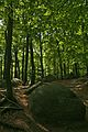 Felsenmeer Wald und Felsen3.jpg