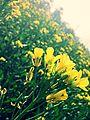 Field greenry.jpg