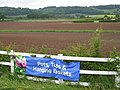 Fields at Leigh Sinton garden centre - 2008 - geograph.org.uk - 818868.jpg