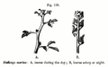Fig139Movement of Plants.png