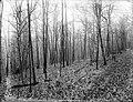 File--C5220-CC5234- Mine Brook, NJ (8fc0d441-ce82-45dc-b800-1902a98e7437).jpg
