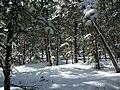 First Snow in Bergen Park - panoramio.jpg