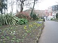 First signs of Spring in Victoria Park - geograph.org.uk - 698479.jpg
