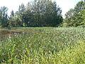 Fischteiche nördlich von Wilthen (5).JPG