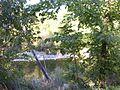 Fiume Orba - Il parco paesaggistico a Predosa 4.JPG