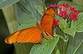 Flame Butterfly 2 (4867256754).jpg