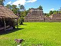 Flickr - archer10 (Dennis) - Belize-1102.jpg