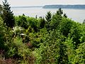 Flickr - brewbooks - View of Puget Sound - John M's garden.jpg