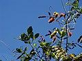Flores da região.jpg