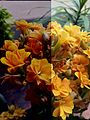 Flower1161.jpg