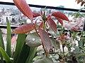 Flower20170802 182057.jpg