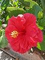 Flower in Mijas.jpg