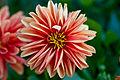 Flower macro at Ballarat botanical garden.jpg