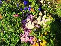 Flowers at Hereford (1700455534).jpg