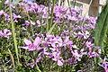 Flowers in Czerwonak.JPG
