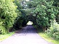 Foliage Tunnel - geograph.org.uk - 234979.jpg
