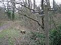 Footpath to Woodside - geograph.org.uk - 709718.jpg