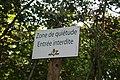 Forêt de Stambruges 04.jpg