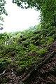 Forest @ Roc de Chère @ Talloires (35606147766).jpg