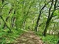 Forest - panoramio.jpg
