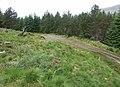 Forest track near Inverlair - geograph.org.uk - 20754.jpg