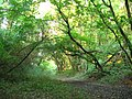 Forest way - panoramio.jpg