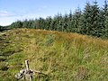 Forestry on Goat Hill - geograph.org.uk - 548874.jpg