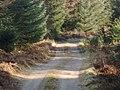 Forestry road, Shambellie - geograph.org.uk - 691397.jpg