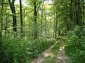 Frankfurt(Oder) Stadtwald im Frühling - panoramio - Gottfried Hoffmann -….jpg