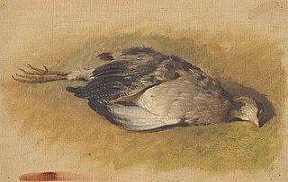 Sketch of a Dead Partridge