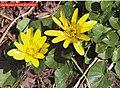 Gəncə- Qazax bitki örtüyü.jpg