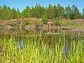G. Nizhnyaya Tura, Sverdlovskaya oblast' Russia - panoramio - Oleg Seliverstov (17).jpg
