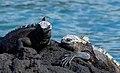 Galapagos (47083218641).jpg