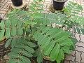 Gardenology.org-IMG 7984 qsbg11mar.jpg