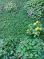 Gardens in Baghdad 48.jpg