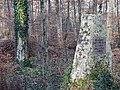 Gedenkstein für Bebenhäuser Forstmeister Fr.Aug. von Tscherning (2013) - panoramio.jpg