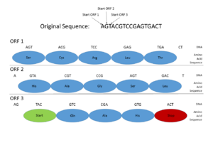 Gene prediction - Image: Gene Prediction