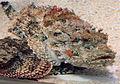 Gfp-scorpianfish.jpg