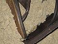 Ghost Crab, Atlantic Ocean, Nags Head, Outer Banks, North Carolina (14448340845).jpg