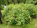 Giardino di Ninfa 127.jpg