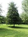 Giovane Albero - panoramio.jpg