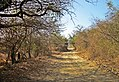 Gir National Park l Gujarat.jpg