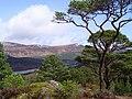 Glen Affric Caledonian Forest Reserve, Loch Beinn a' Mheadhoin - geograph.org.uk - 864827.jpg